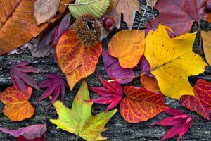 10 Tips for Fall and Winter Heating